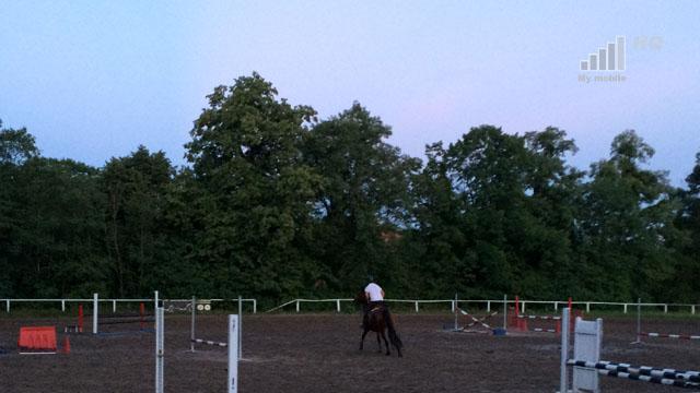 mamy-dwoch-czarnych-rynkowych-konii